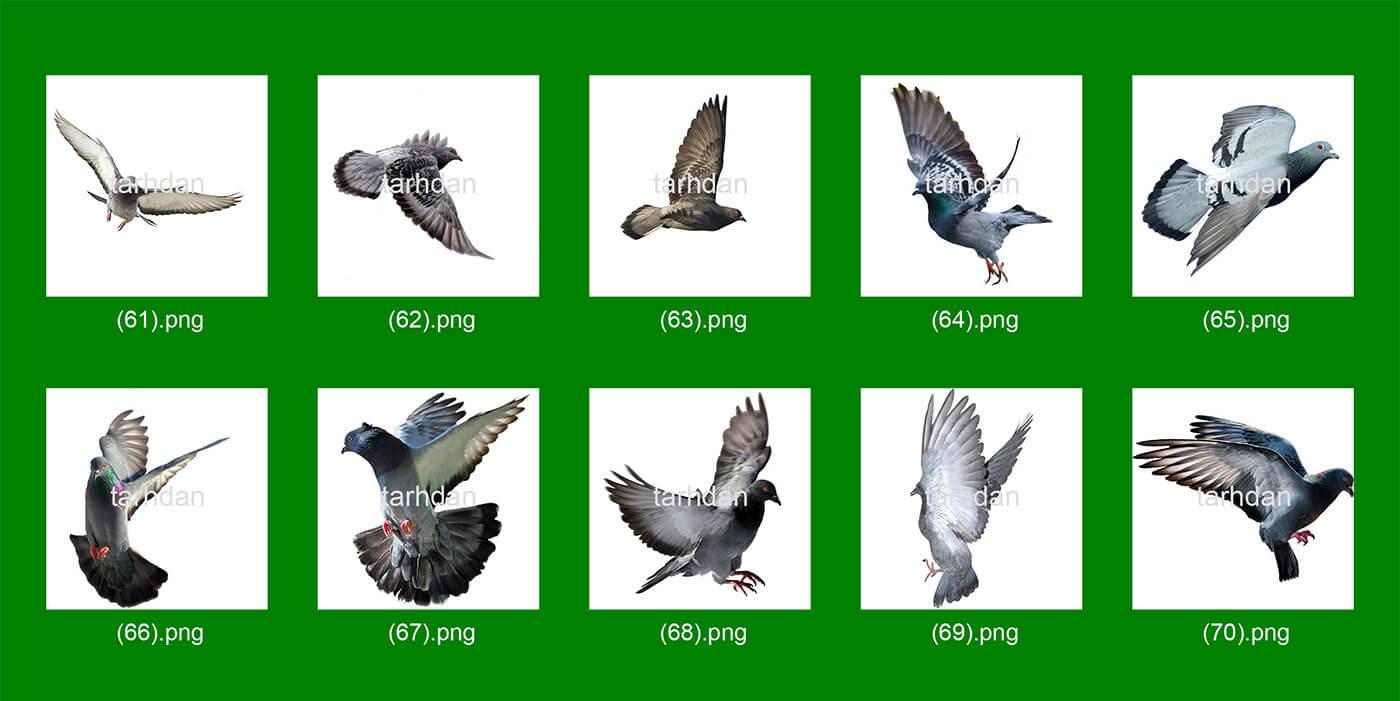 دانلود عکس-دور-بری-شده-کبوترها