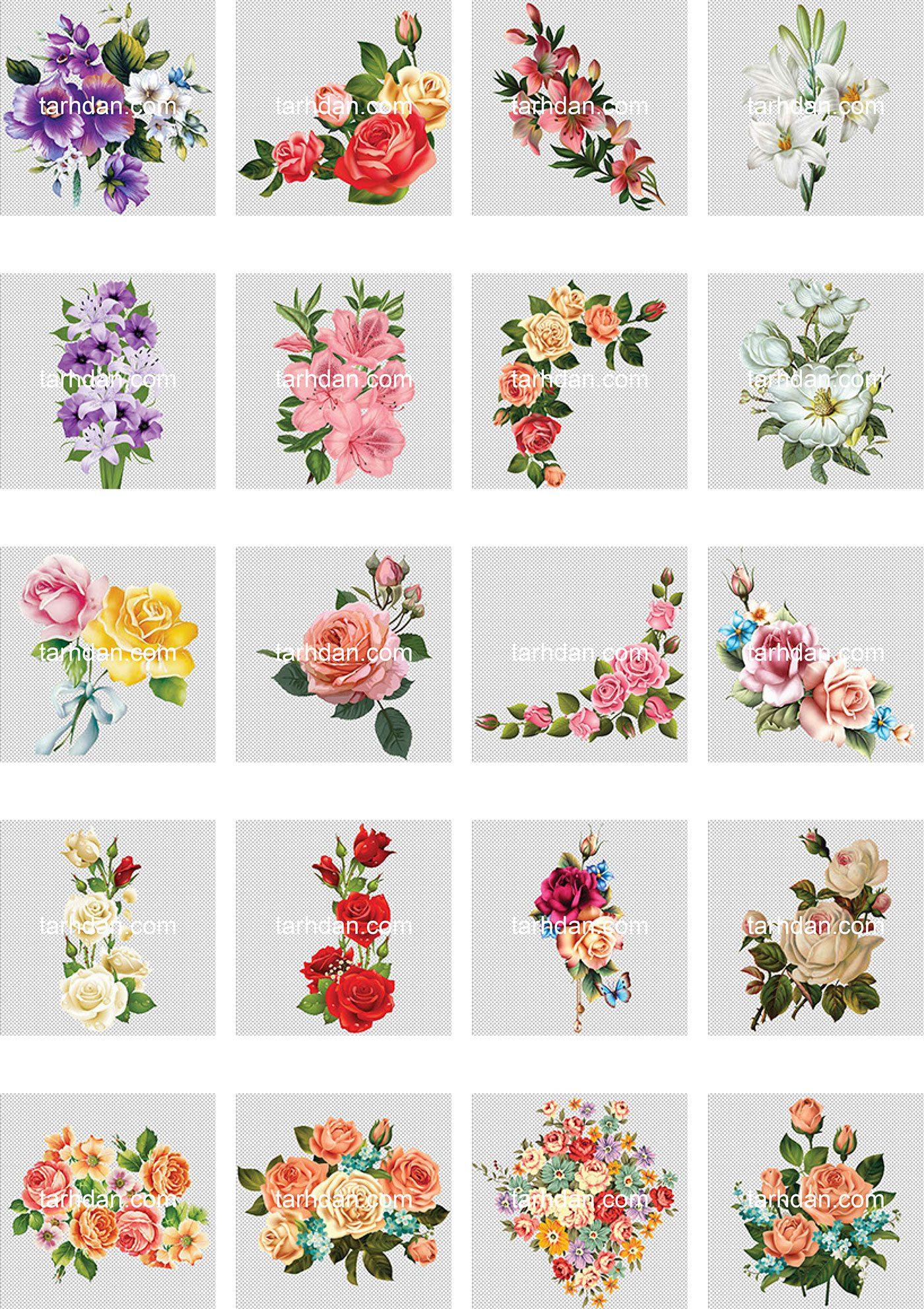 دانلود مجموعه دور بری شده عکس گل (1)