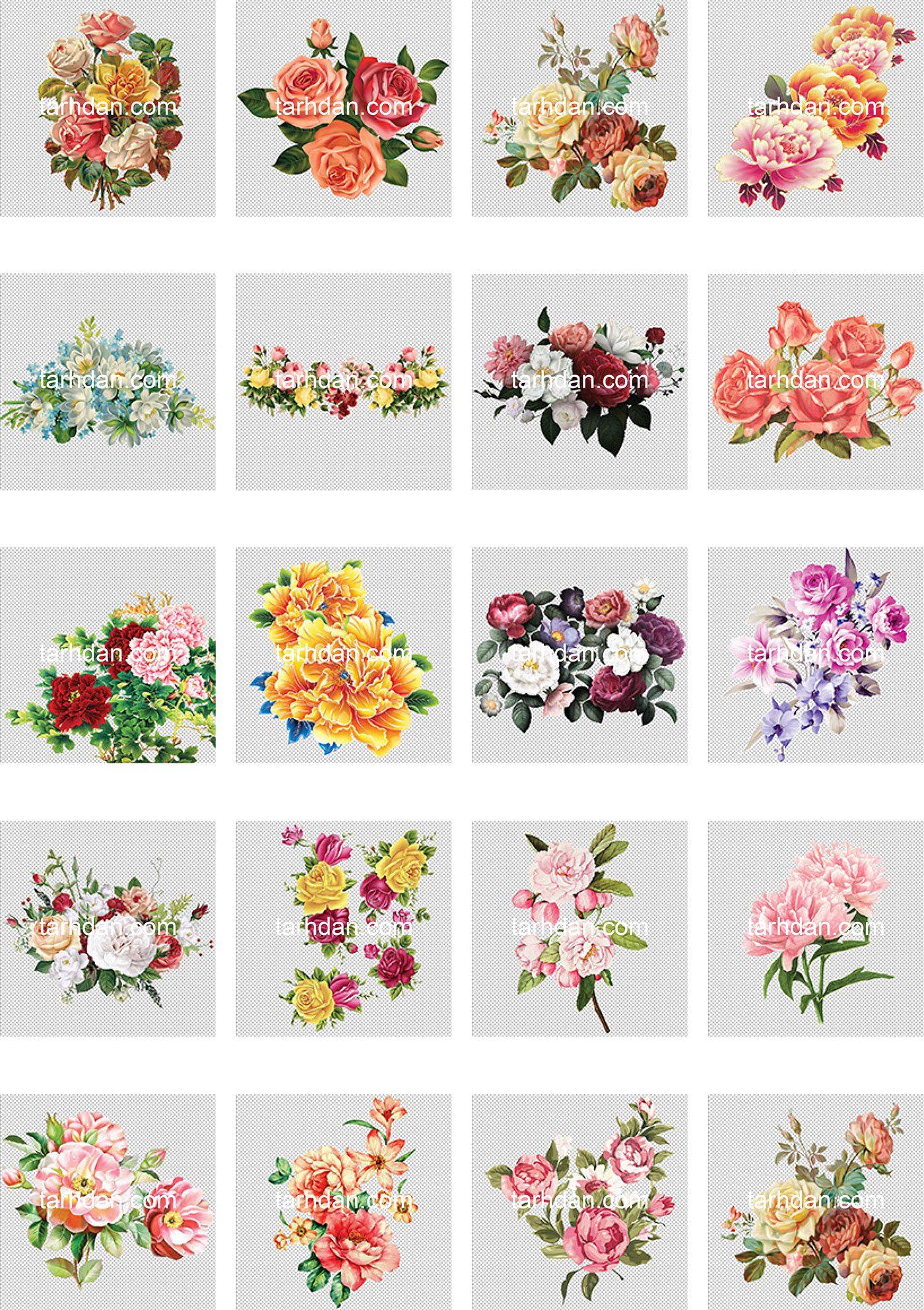 دانلود مجموعه دور بری شده عکس گل (2)
