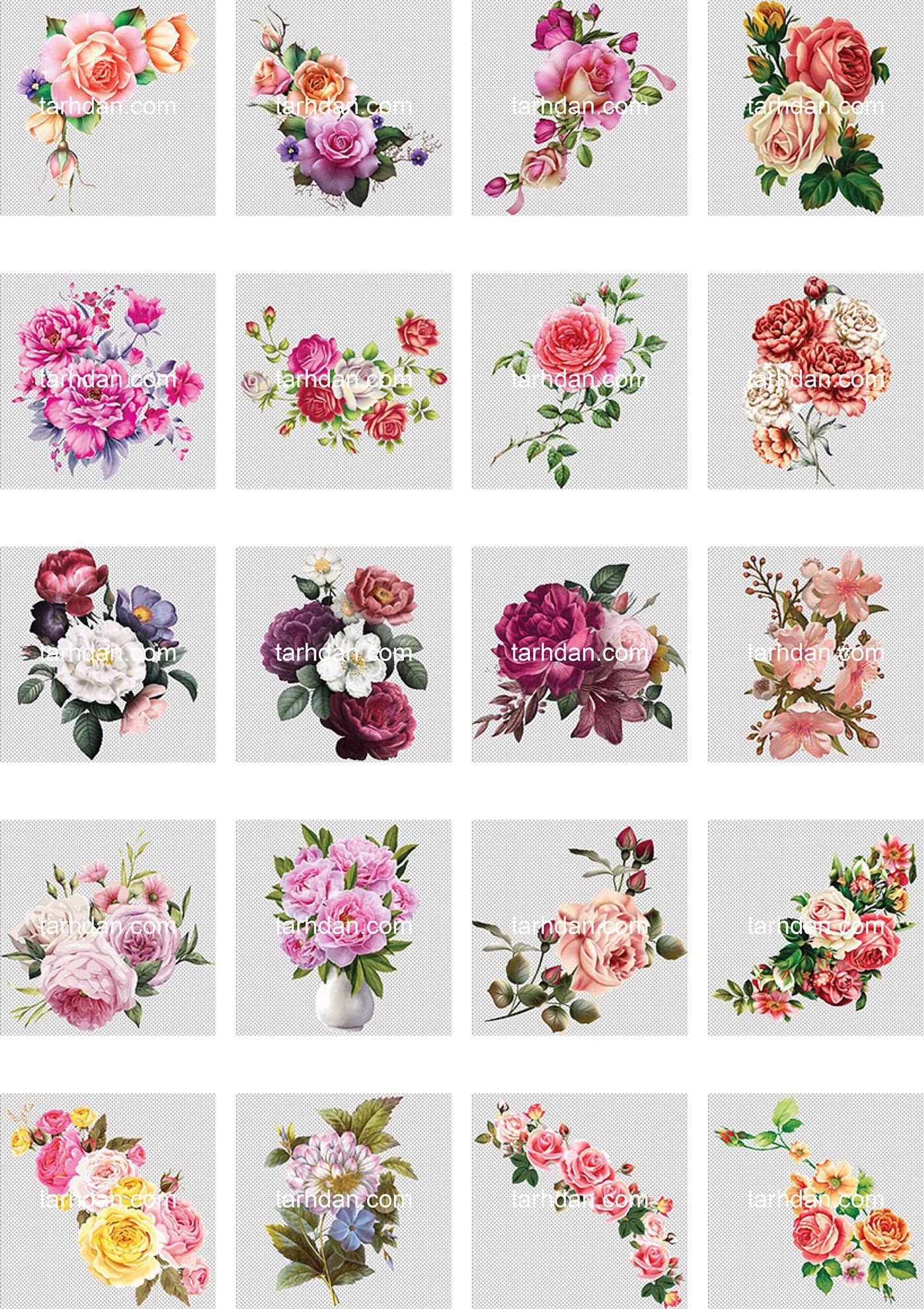 دانلود مجموعه دور بری شده عکس گل (3)