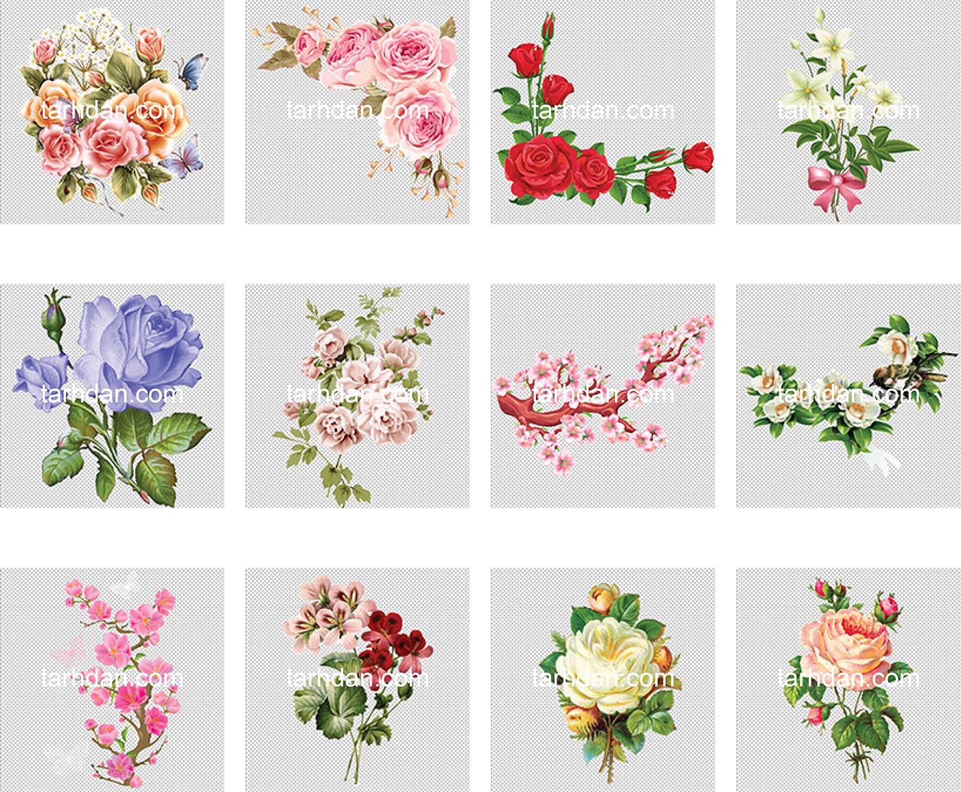 دانلود مجموعه دور بری شده عکس گل (4)