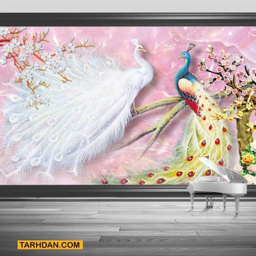 دانلود کاغذ دیواری عکس طاووس ها